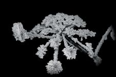 Frost_4 Royalty Free Stock Image