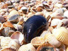 Free Mussel From Azov Stock Photography - 4188482