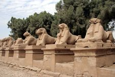 Sheeps Statues In Karnak Temple Royalty Free Stock Photography