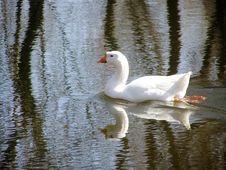 Free Goose Stock Photo - 4189680