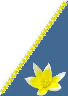 Free Tulip In The Blue Background Royalty Free Stock Photography - 4189997