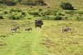 Free Zebra Family Crossing Road Behind Safari Truck Royalty Free Stock Images - 4195039
