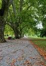 Free Park During Autumn Stock Photo - 4195180