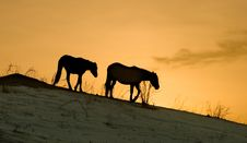 Free Horses Stock Photography - 4191452