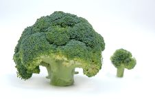 Free BROCCOLI Stock Images - 4192264