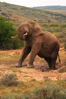 Free African Elephant Bull Stock Photos - 4193063