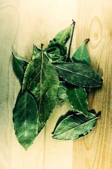 Free Laurel Leaves Royalty Free Stock Images - 4193239