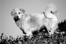 Free Silver Dog Stock Photography - 4193422