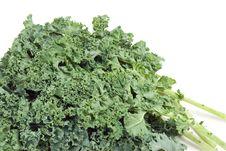 Free Nutritious Kale Stock Image - 4193431
