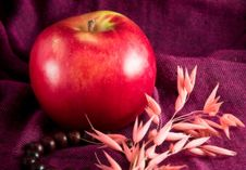Free Apple Ikebana Necklace Stock Photos - 4193753
