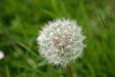 Free Dandelion Stock Image - 4194831