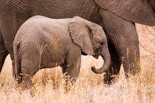 Free Baby Elephant Stock Photo - 4195070