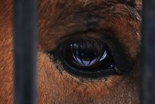 Free Horse S Eye Royalty Free Stock Photo - 4195795