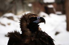 Free Proud Eagle Royalty Free Stock Photo - 4195915