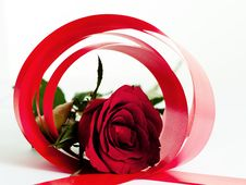 Free Red Rose Circle Stock Photography - 4196032