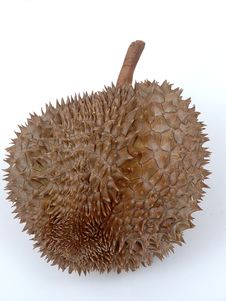 Free Durian Royalty Free Stock Photography - 4196517