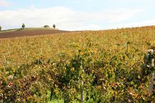 Country Autumn Vineyards Royalty Free Stock Photo