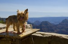 Free Dog Gone Great Vacation Royalty Free Stock Photo - 4197945