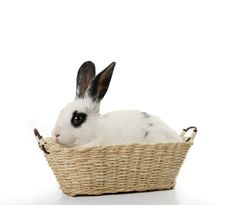 Free Cute Rabbit In Basket Stock Photography - 4198482