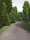 Free Cemetary Path 4 Stock Photos - 420803