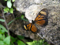 Free Butterfly Royalty Free Stock Photo - 421055