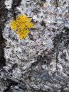 Free Lichen Royalty Free Stock Image - 424456