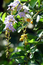 Free Flower Stock Photo - 427710