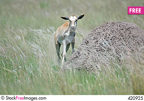 Free Newly Born Deer. Royalty Free Stock Photo - 420925