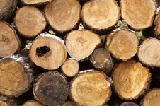 Free Pile Of Logs Royalty Free Stock Photos - 423418