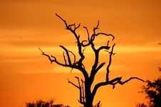 Free African Sunset Stock Image - 425841