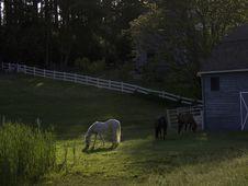Free Three Horses Royalty Free Stock Image - 427376