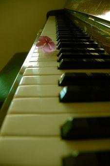 Free Flower On Piano Key Royalty Free Stock Photo - 427735