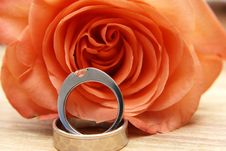 Wedding Rings On A Red Rose Royalty Free Stock Photo