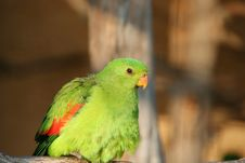 Free Green Parrot Royalty Free Stock Photography - 4200547