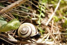 Black Snail Royalty Free Stock Photos