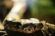 Free Snake Stock Photos - 4203143