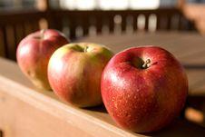 Free Apple Stock Photo - 4203500