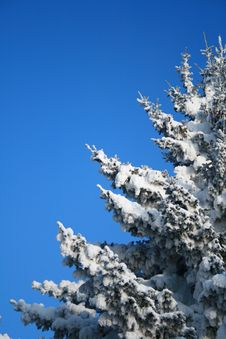Free Fragment Of Snow-covered Fir-tree Royalty Free Stock Photography - 4204237