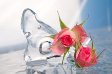 Chilled Rose In The Ice Royalty Free Stock Photos