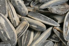 Free Closeup Of Sunflower Seeds Stock Images - 4206484
