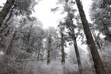 Free Frozen Forest Stock Photos - 4207583