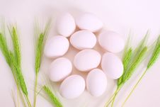 Free Eggs Stock Photos - 4207833