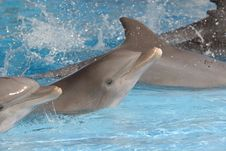 Free Dolphins Royalty Free Stock Photos - 4207928