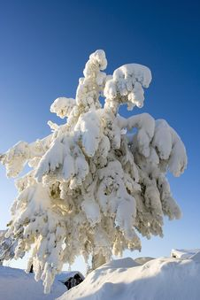 Free Lapland Winter Wonderland Stock Photography - 4208062