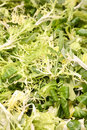 Free Lettuce Leaves - Vegetarian Background Stock Photos - 4211573