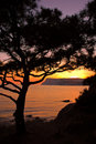 Free Pine Tree Against Sea Sunset And Mountains Stock Photography - 4213802