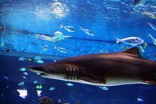 Free Shark In Aquarium Stock Images - 4210754