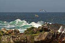 Gulls Soaring In Ocean Cost Stock Photos