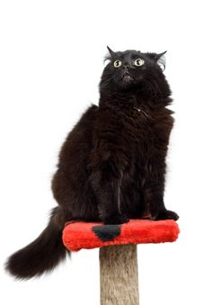 Free Black Angry Cat Royalty Free Stock Photo - 4211525