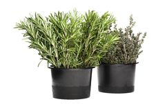 Free Fresh Rosemary And Thyme Stock Photography - 4211582
